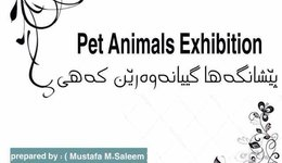 Announce that on 29/3/2018, the College of Veterinary Medicine- University of Duhok will be holding a Pet animal's fair at the clinic building